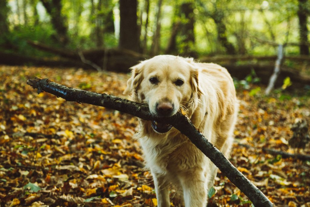 Fräuleins gute Stube Mama Blog stellt Hund Amy vor