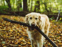 Fräuleins gute Stube Mama Selbstversorgung Dog Blog stellt Hund Amy vor