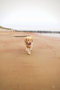 Amy Hunde Blog Holland Urlaub